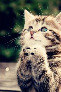 praying kitty
