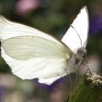 butterfly-50644_640
